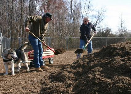 Brandywine Hundred resident Paul Cropper (left) and New Castle County Councilman Bob Weiner (R-Chatham), load mulch into a wagon powered by Cropper's Malamute, Sedna.